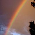 Free Rainbow  by Ben Upham III