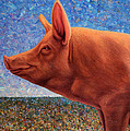 Free Range Pig by James W Johnson