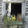 Free Window by Michael Vinyard