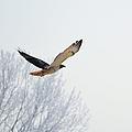 Freebird 2 by Bonfire Photography