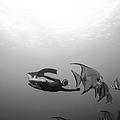 Freediver and Batfish by One ocean One breath