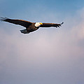 Freedom Flier by Bill Wakeley