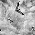 Freedom Impasto Bw by Steve Harrington