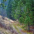Freedom Road by Ben Upham III