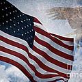 Freedom by Scott Pellegrin