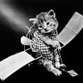 Frees Kittens, C1914 by Granger