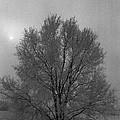 Freezing Fog by Mike Wheeler