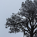 Freezing Fog by Renny Spencer