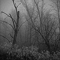 Freezing Rogue Valley Fog At Night by Mick Anderson