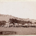 Freighting In The Black Hills. Photographed Between Sturgis by Litz Collection