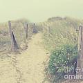 French Coast Beach by Svetlana Novikova