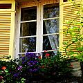 French Window Dressing by Jacqueline M Lewis
