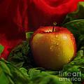 Fresh Apple On Silk by Wobblymol Davis