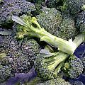 Fresh Broccoli by Cynthia Wallentine