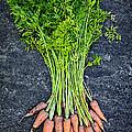 Fresh Carrots From Garden by Elena Elisseeva