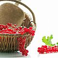 Fresh Currants by Tanja Riedel