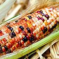 Fresh Decorative Indian Corn by Don Bendickson