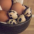 Fresh Eggs by Heather Applegate