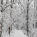 Fresh Fallen Snow by David Yunker