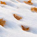 Fresh Fallen by Steven Milner