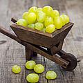 Fresh Green Grapes In A Wheelbarrow by Aged Pixel
