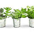 Fresh Herbs In Pots by Elena Elisseeva