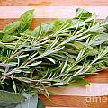 Fresh Herbs by Nina Ficur Feenan