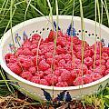 Fresh-picked Raspberries by E Faithe Lester