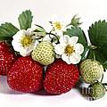 Gardenfresh Strawberries by Iris Richardson