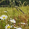 Fresh Rain Fresh Flowers by Nathan Anglin