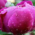 Fresh Rain by Susan Herber