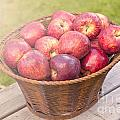 Fresh Red Apples by Sophie McAulay