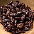 Fresh Roasted Cocoa Beans - Nibs by Iris Richardson