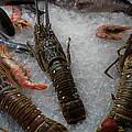 Fresh Santorini Lobsters by Colette V Hera  Guggenheim