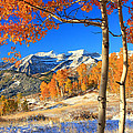 Fresh Snow In The Aspens. by Johnny Adolphson