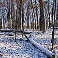 Fresh Snow In The Woods by Mark Hudon