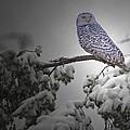 Fresh Snow  by Rob Mclean