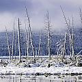 Fresh Snowfall And Bare Trees by Ken Gillespie