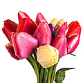 Fresh Spring Tulip Flowers by Edward Fielding