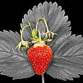 Fresh Strawberry And Leaves by Donald  Erickson
