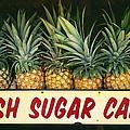 Fresh Sugar Cane by Dana Edmunds - Printscapes