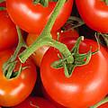Fresh Whole Tomatos On Vine by David Millenheft