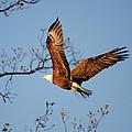 Freshening The Nest by Jai Johnson