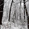 Freshly Fallen Snow by Bill Cannon