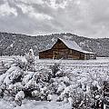Freshly Fallen Snow by Erika Fawcett