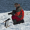 Friend Of The Penguins... by Nina Stavlund