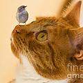 Friend Or Foe by Brian Roscorla