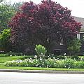 Friendly Green Gardens Of Cherryhill Nj America       by Navin Joshi