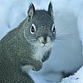 Friendly Squirrel by Tonya Hance