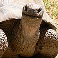 Friendly Tortoise by Laurel Powell